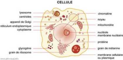 effets des ondes magnétiques sur la cellule